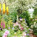 Photos: ようこそ花園へ~