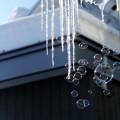 写真: 冬のしゃぼん玉~キラリと夢を飛ばして...