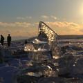 Photos: 夕陽のジェリーアイス1