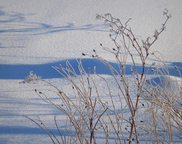 Photos: 樹氷