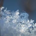写真: 弥生の結晶