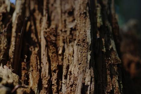 木の迫力に驚く。