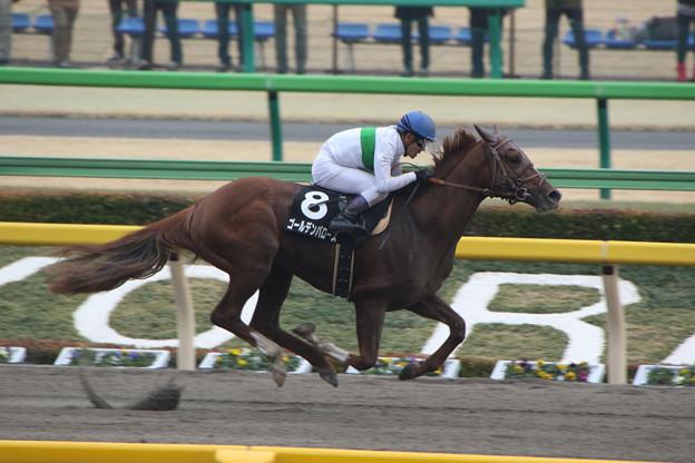 ゴールデンバローズ レース(15/02/22・ヒヤシンスステークス)