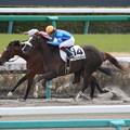 ファニーヒロイン レース(16/03/26・1R)