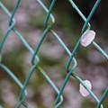 Photos: 行く春