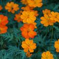 咲き揃う花
