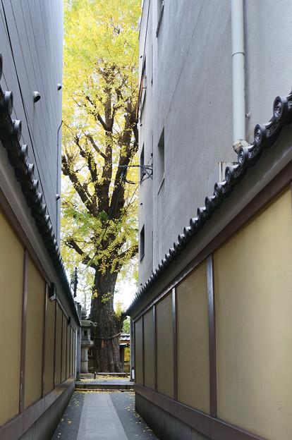 隙間の黄葉