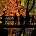 秋を渡る橋