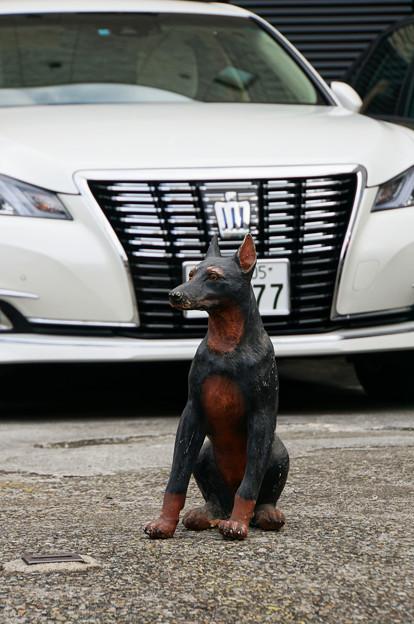Photos: 番犬