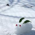 Photos: 雪解けうさぎ