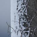 Photos: 片面雪景色