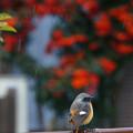 写真: 雨中の鳥