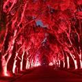 写真: 赤の路