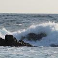 Photos: 城ヶ島 海その703 IMG_1155