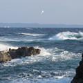 城ヶ島 海その726 IMG_1188