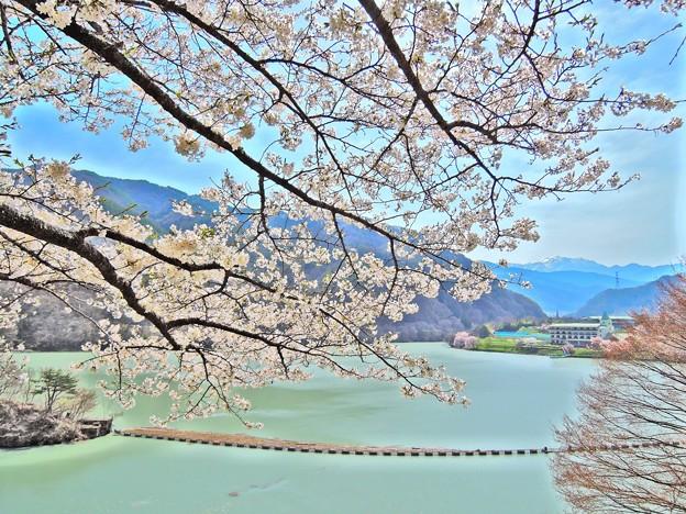 桜と高遠湖(HDR)