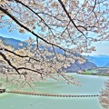 Photos: 桜と高遠湖(HDR)
