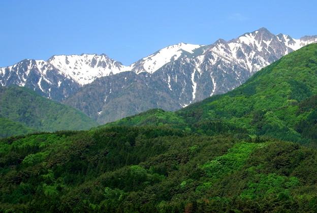 新緑と雪山