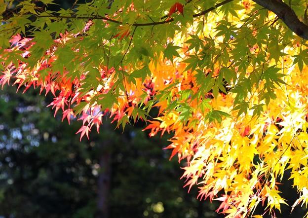 色とりどりの葉