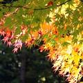 Photos: 色とりどりの葉