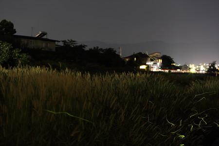 鳥居ヶ丘1