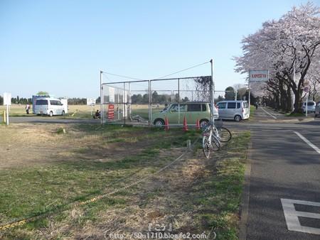 150331-桜 海軍道路 (53)