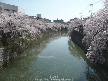 150402-桜 大岡川 (39)