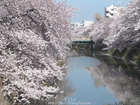 150402-桜 大岡川 (77)