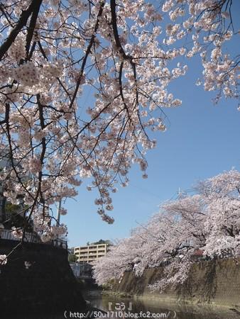 150402-桜 大岡川 (85)