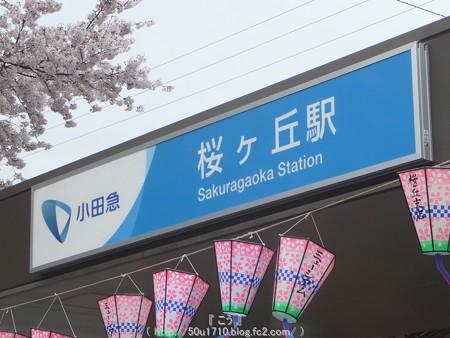 150403-桜 大和千本桜 (1)