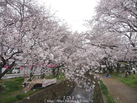 150403-桜 大和千本桜 (61)
