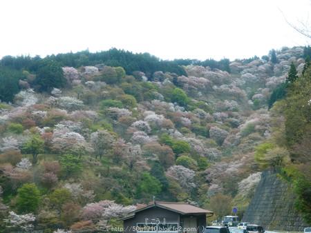 160410-吉野山 (11)