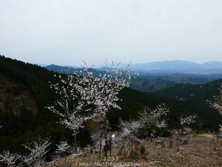 160410-吉野山 (39)