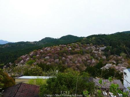 160410-吉野山 (53)
