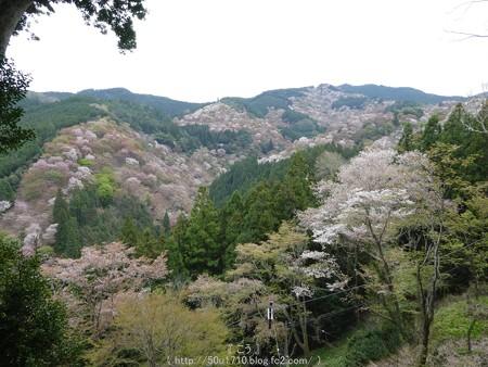 160410-吉野山 (74)