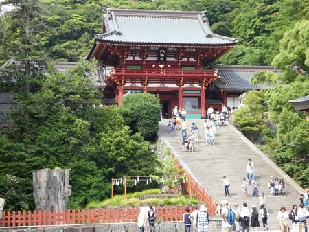 160606-鶴岡八幡宮 (12)