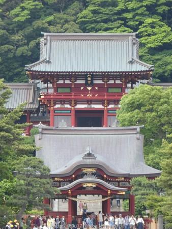 160606-鶴岡八幡宮 (35)
