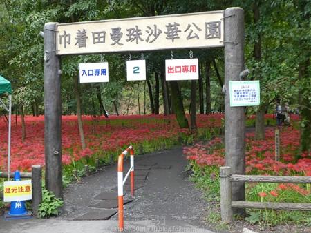 160926-高麗駅→巾着田 (21)