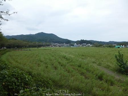 160926-巾着田 (218)