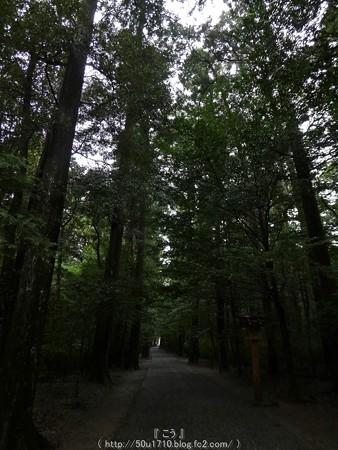 161017-瀧原宮 (10)