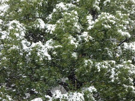 161124-雪 (1)