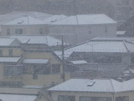 161124-雪 (8)