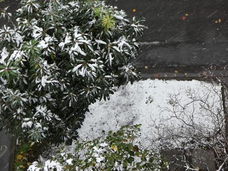 161124-雪 (11)