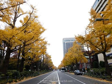 161130-山下公園通り黄葉 (23)