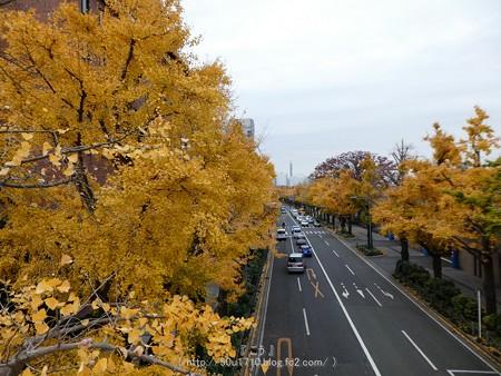 161130-山下公園通り黄葉 (53)