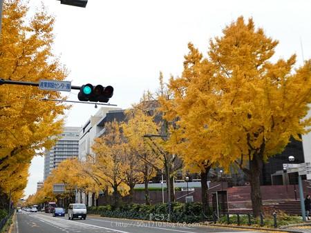 161130-山下公園通り黄葉 (18)