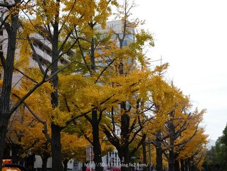 161130-山下公園通り黄葉 (33)