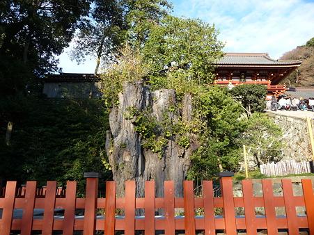 101210-八幡さま (9)