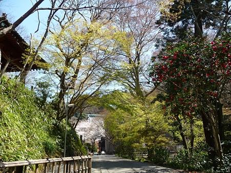 110406-妙本寺 (33)
