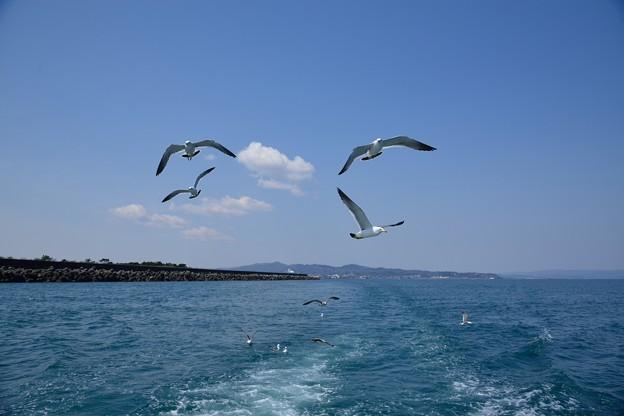 富山湾とカモメ